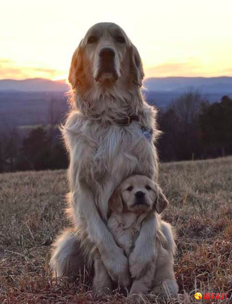 Foto divertente: Mother and son